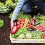 pour-une-politique-agricole