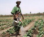 guinea siguiri farmer woman