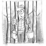 Producteur acéricole québécois prisonnier - Dessin de Mcleod (2004)