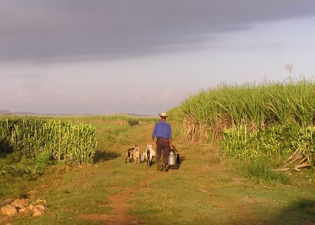 Photo d'un paysan cubain.